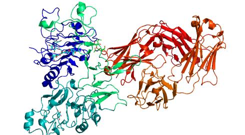 cząsteczka pertuzumabu