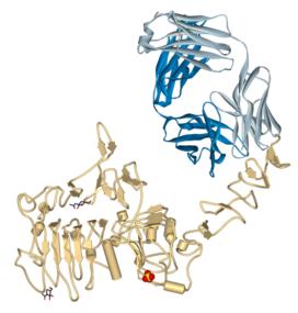 lek trastuzumab i receptor her2