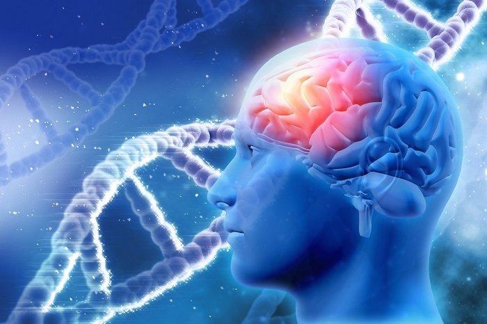 ilustracja mózgu i dna