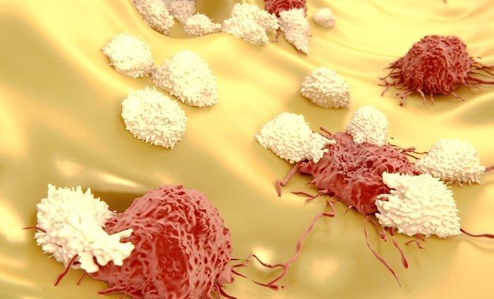 limfocyty atakujące komórki nowotworowe