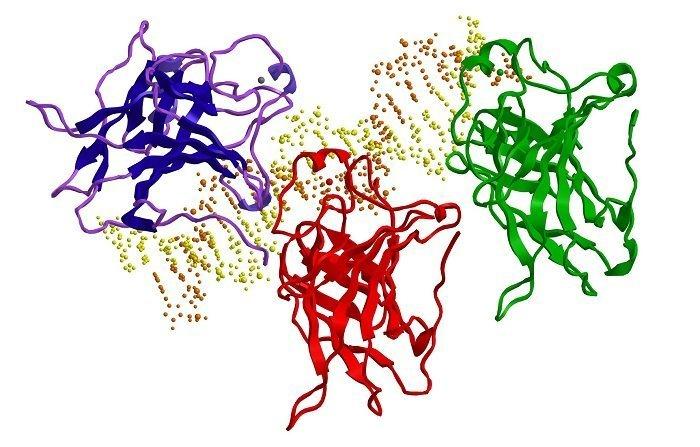 białko p53 i dna