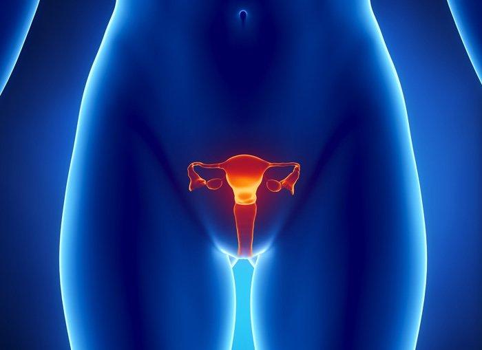 układ rozrodczy kobiety