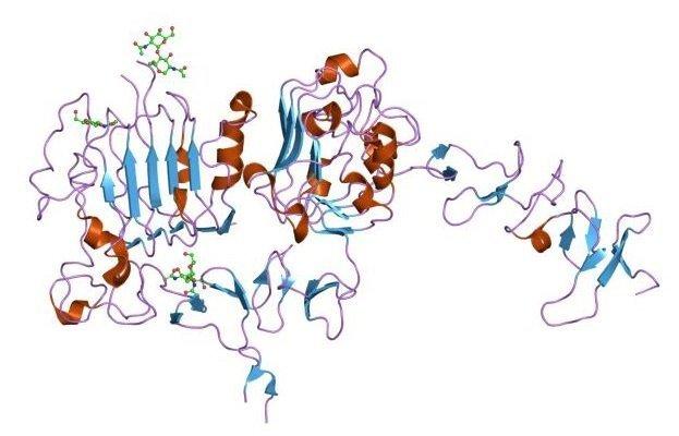 onkogen receptory her2