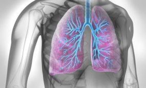 ilustracja płuc