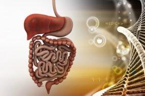 ilustracja żołądka